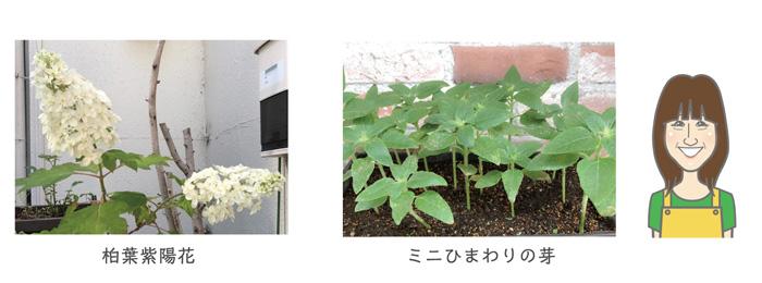 170726_garden